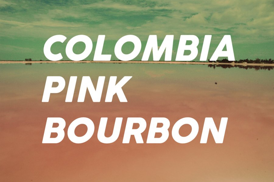 200g Colombia Pink-Bourbon<br>(中煎り)<img class='new_mark_img2' src='https://img.shop-pro.jp/img/new/icons8.gif' style='border:none;display:inline;margin:0px;padding:0px;width:auto;' />