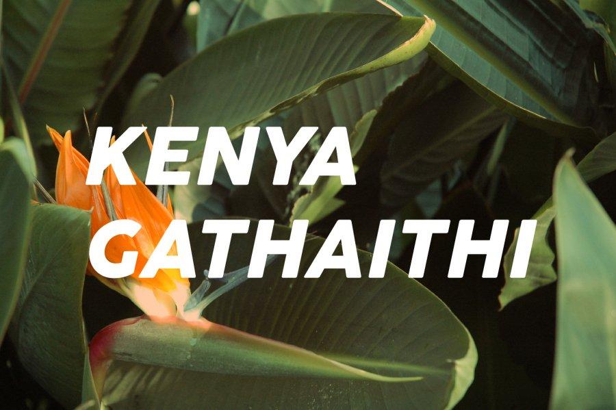 100g Kenya Gathaithi<br>(中煎り)