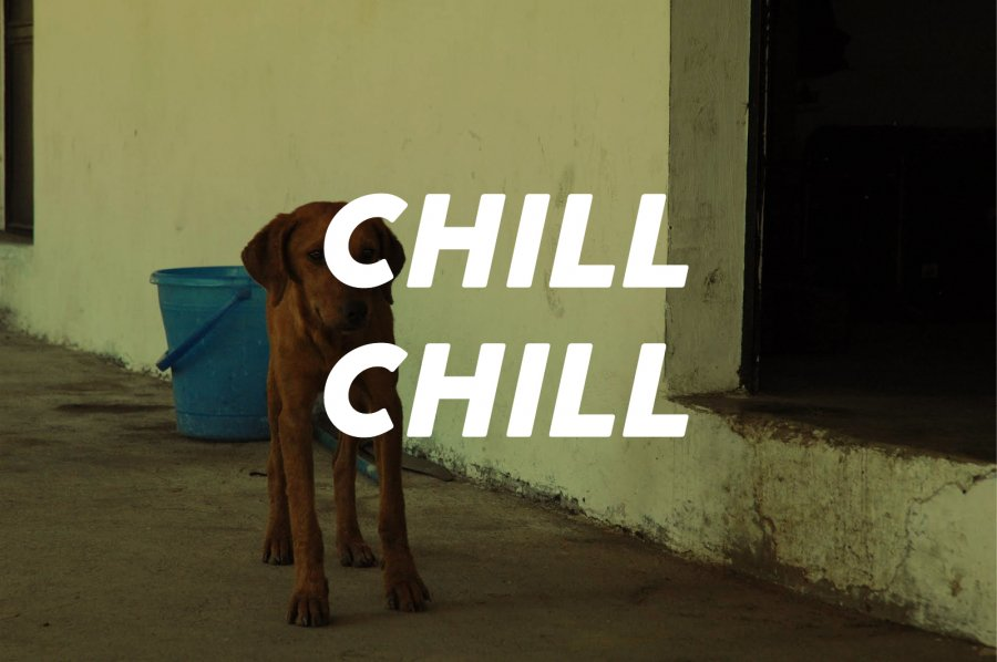100g chill chill(中深煎り)