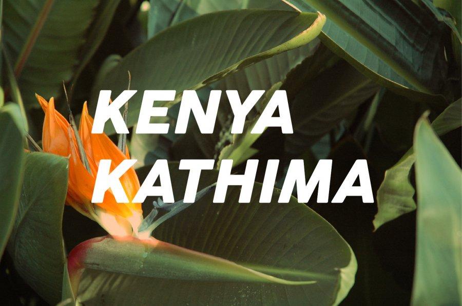 100g Kenya Kathima(中煎り)<img class='new_mark_img2' src='https://img.shop-pro.jp/img/new/icons47.gif' style='border:none;display:inline;margin:0px;padding:0px;width:auto;' />