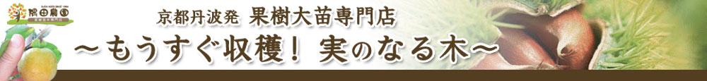 果樹苗木・大苗・成木通販の隅田農園(すだのうえん)@京都丹波