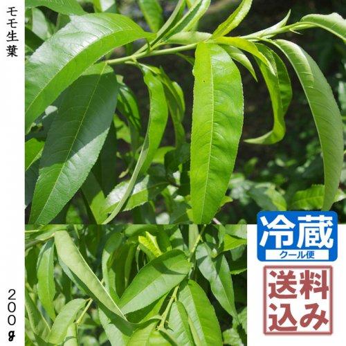 薬用生葉◇モモ生葉《180g》 [送料・クール便代込価格]