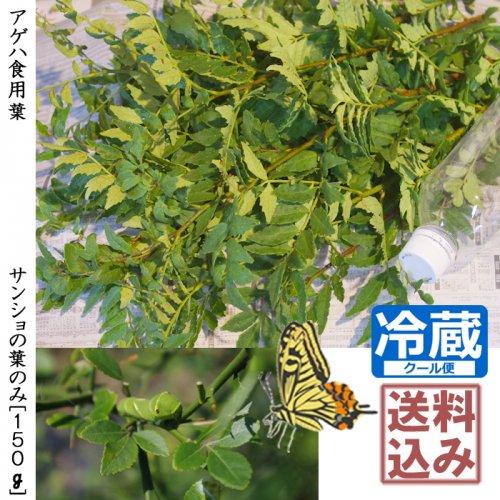 《2021年度販売終了》アゲハ食用葉(食樹)◇サンショの葉のみ《150g》[送料・クール便代込価格]