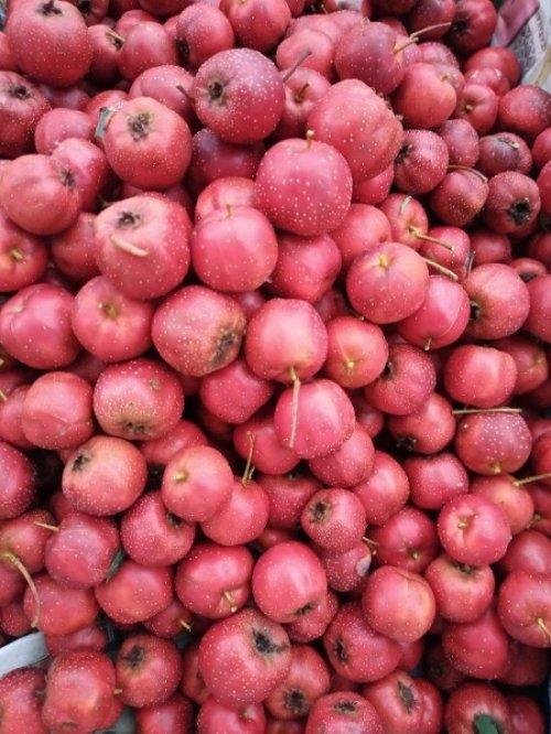 ◇サンザシ生果実 農薬不使用《0.8キロ》 [チルド・送料込み価格]