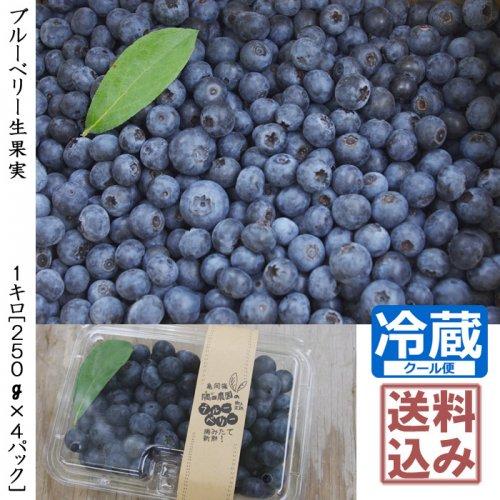 ◇ブルーベリー生果実 化学肥料不使用:農薬不使用《1キロ》 [チルド・送料込み価格]