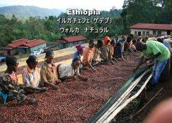 エチオピア イルガチェフェ(ゲデブ) ウォルカ ナチュラル シティロースト(200g)