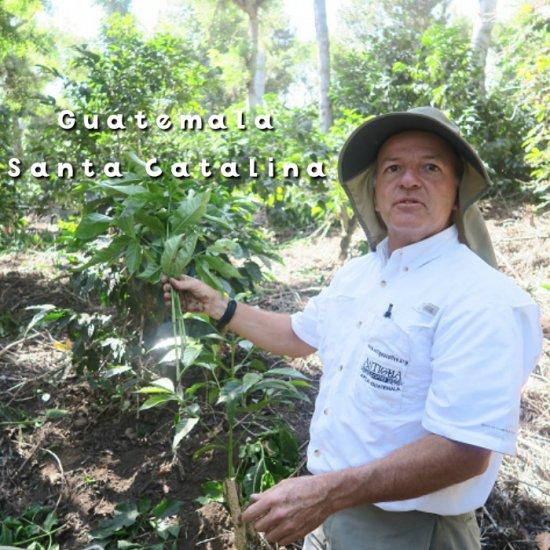 グァテマラ「サンタカタリーナ農園」 HAB シティーロースト(200g)