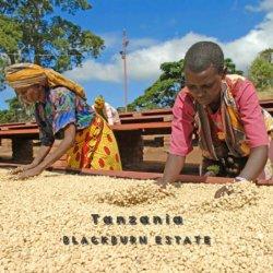 タンザニア「ブラックバーン農園」シティーロースト(200g)