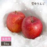 (冷蔵)青森黒石雪中りんご小玉【サンふじ】ご贈答用約5kg(23〜28玉)[高橋りんご園]