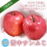 (冷蔵)青森雪中りんご小玉【サンふじ】ご家庭用約5kg(20〜25玉)[高橋りんご園]※4月初旬から発送予定