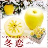 (常温)冬恋[はるか]約2.5kg(8〜10玉)※12月10日頃から出荷