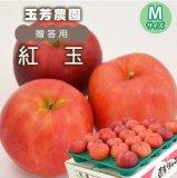 (常温)紅玉【贈答用】Mサイズ[玉芳農園]※10月中旬から発送予定です