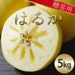 (常温)りんごのはるか【贈答用】Lサイズ [玉芳農園]※発送は12月上旬からの予定
