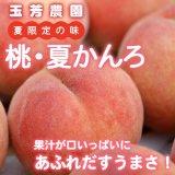 (冷蔵)青森県産 桃 夏かんろ[玉芳農園]※7月下旬から発送予定