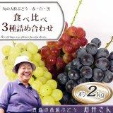 (常温)旬の大粒ぶどう赤・白・黒 食べ比べ3種詰め合わせ 約2kg [石井ぶどう園] ※10月上旬から発送予定