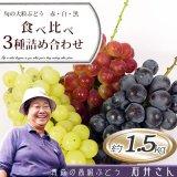 (常温)旬の大粒ぶどう赤・白・黒 食べ比べ3種詰め合わせ 約1.5kg [石井ぶどう園] ※10月上旬から発送予定