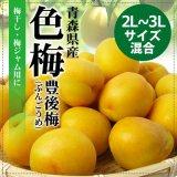 (冷蔵)青森の完熟梅[豊後梅-ぶんごうめ-]特選2L〜3Lサイズ混合