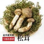 (冷蔵)岩手の天然松茸サイズ混合【つぼみ】多め※9/20以降採れ次第発送予定