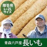 (常温)青森六戸産長芋【贈答用】3Lサイズ[川村さん]