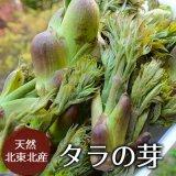 (冷蔵)天然たらの芽(タラノキ)サイズ混合[北東北の山菜]※4月下旬から発送予定