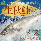 (冷蔵)生秋鮭約3kg前後 【 メスいくら付】(1本そのまま)11月下旬頃発送予定