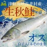 (冷蔵)生秋鮭約3kg前後 【 オス白子付】(1本そのまま)11月下旬頃発送予定