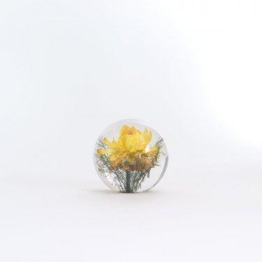 HAFOD GRANGE - PAPERWEIGHT S #YELLOW HELICHRYSUM [HGPW1-007]