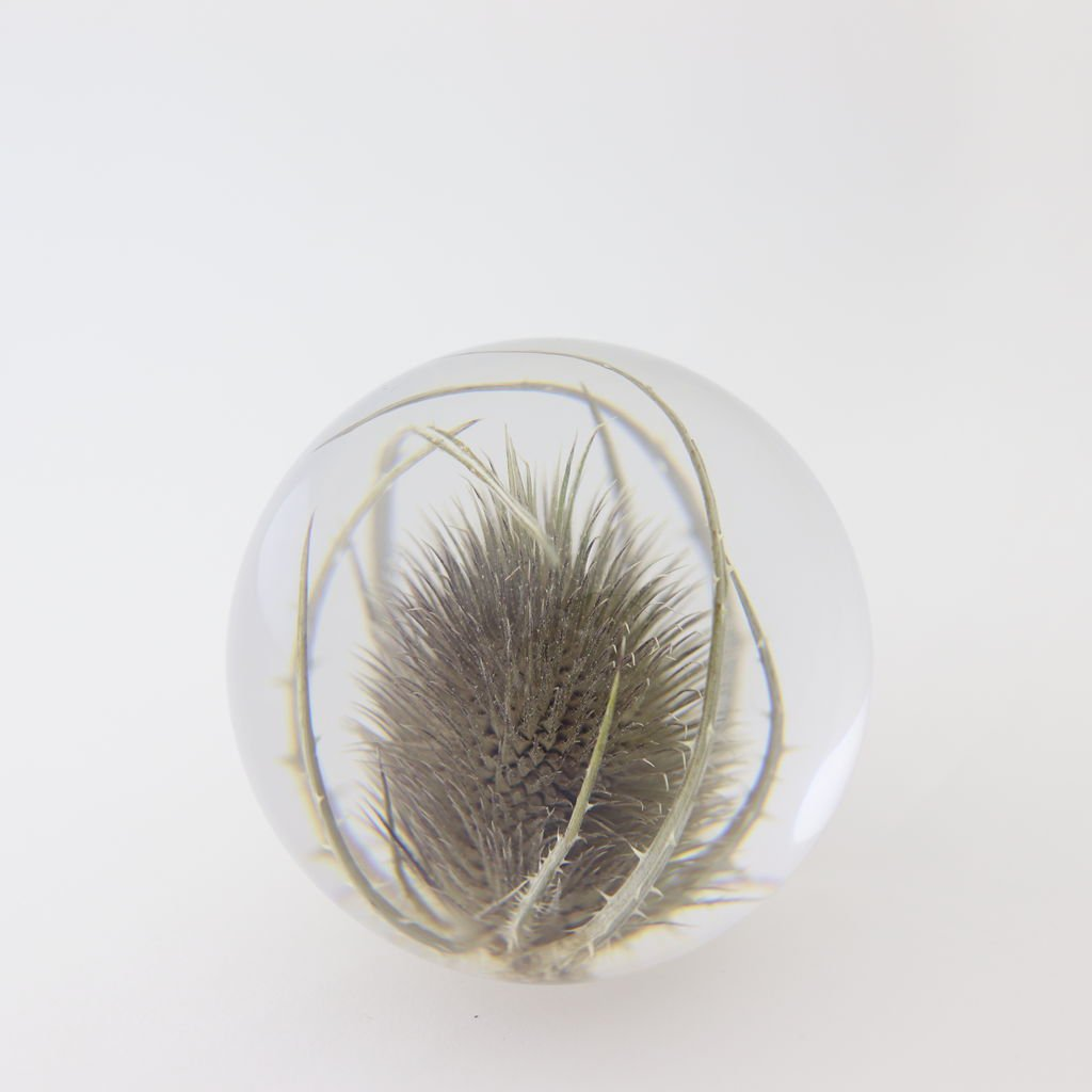 HAFOD GRANGE - PAPER WEIGHT SMALL #TEASEL [HGPW1-009]