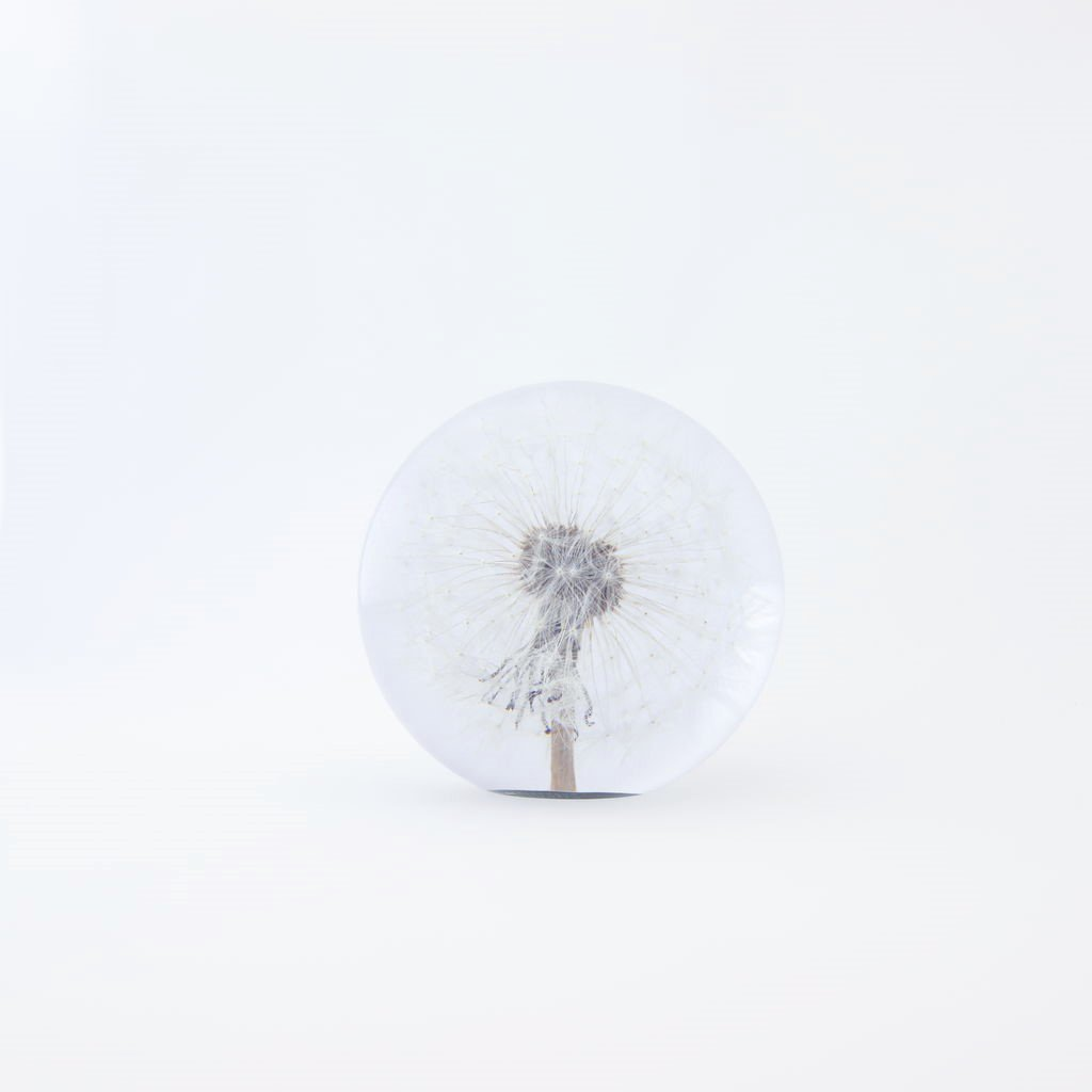 HAFOD GRANGE - PAPER WEIGHT SMALL DANDELION #ONE [HGPW1-003]