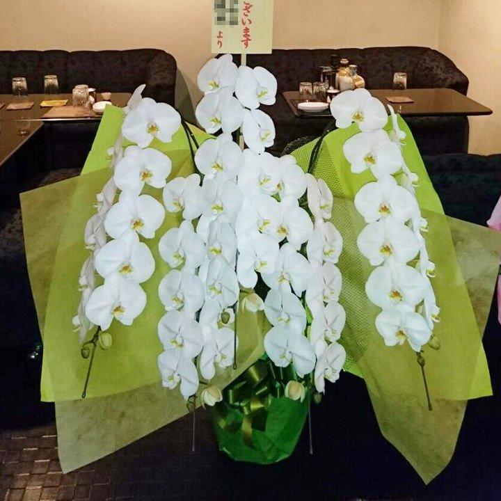 プラチナム胡蝶蘭5本立ち