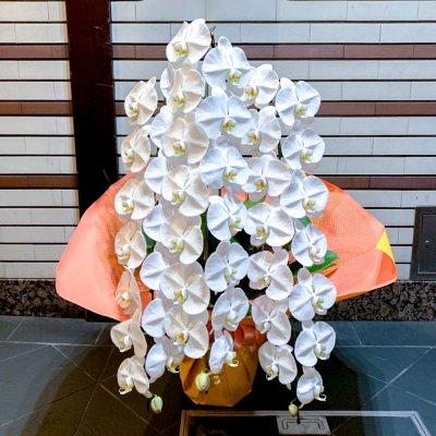 プラチナム胡蝶蘭3本立ち