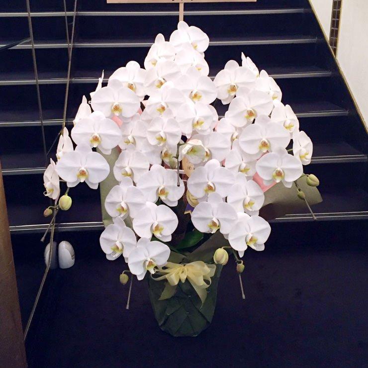 スタンダード胡蝶蘭5本立ち