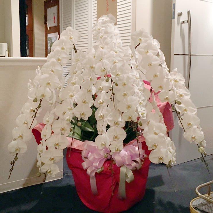 プラチナム胡蝶蘭10本立ち