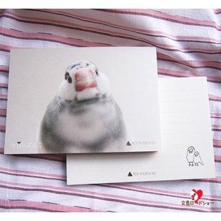 【残り僅か!】torinotorioトリノトリオ【ごま塩文鳥】今日のぶんこメモ帳