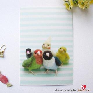 【残り僅か!】「インコ&文鳥たち ミント色ボーダー」mochi mochi nao' おとりさんズポストカード
