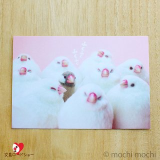 羊毛フェルト作家 mochi mochi nao'「ふくふく」おとりさんズポストカード「文鳥」