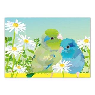 【残り僅か!】とりアート【花とまめ】メモ帳*白い花とマメルリハのメモパッド 水色グラデーション /1冊