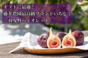 【ギフトに最適!】藤井農園最高級ブランドいちじく『羽曳野バイオレット』(9個or12個入り)