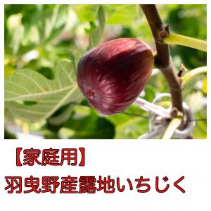 【ご家庭用】羽曳野産露地いちじく約1kg(9個or12個入り)