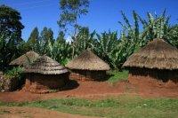 エチオピア イルガチェフェ コチェレ地区ゴティティ・ウォッシングステーション (Natural) 深煎り