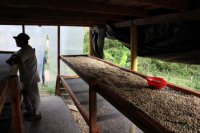 コロンビア ウイラ-ピタル ペドロ・ネル・ベタンコート 中煎り