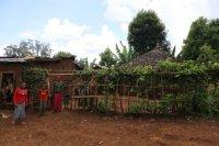 [新入荷]エチオピア イルガチェフェ ウォルカ  ハロハディ村 (natural) 中浅煎り