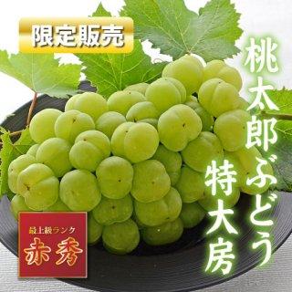 【限定販売】岡山県産桃太郎ぶどう迫力の1.0kg特大房【赤秀】