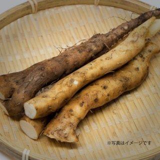 【完全予約制】岡山県産 真庭の自然薯