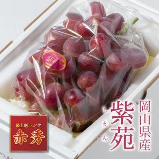 【只今シーズン中】岡山県産 紫苑(しえん)【赤秀】1房(800g以上)