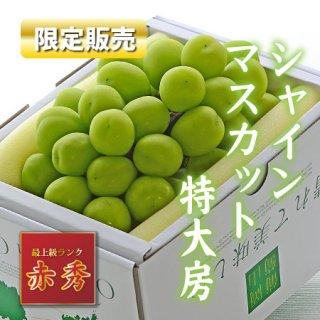 【限定販売】岡山県産シャインマスカット 迫力の1.0kg特大房【赤秀】