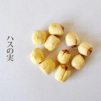 蓮の実(ハスの実)/500g