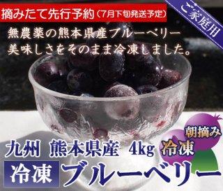 【先行予約】熊本産スムージー用大盛り冷凍ブルーベリー4キロ