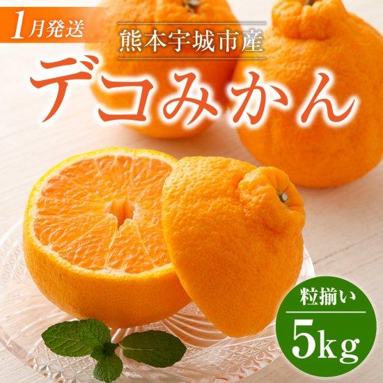 熊本宇城市産 デコみかん 5kg 粒揃い デコポンと同品種