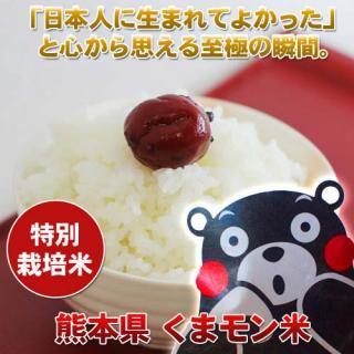 [定期購入12ヶ月]熊本産くまモン米10キロ